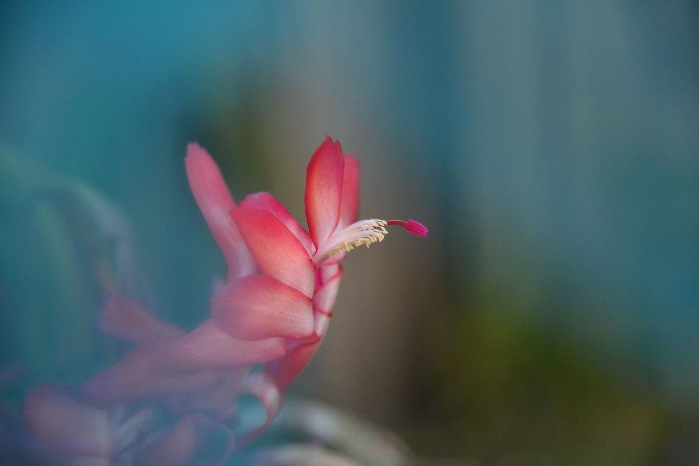 Flower shot through green nylon