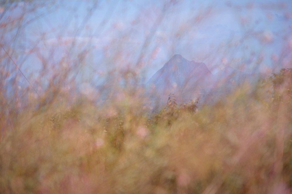 View of Mt Beerwah through grasses