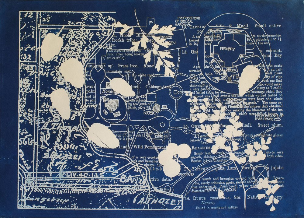 Cyanotype of crystal tray and flowers