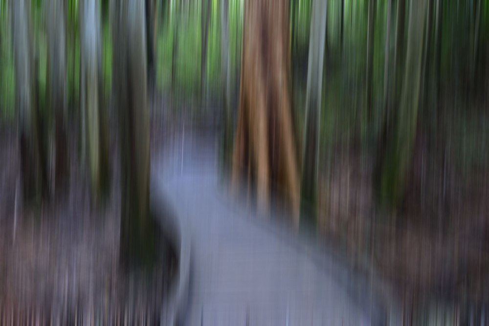 Intentionally blurred photograph of a boardwalk in Mapleton National Park.
